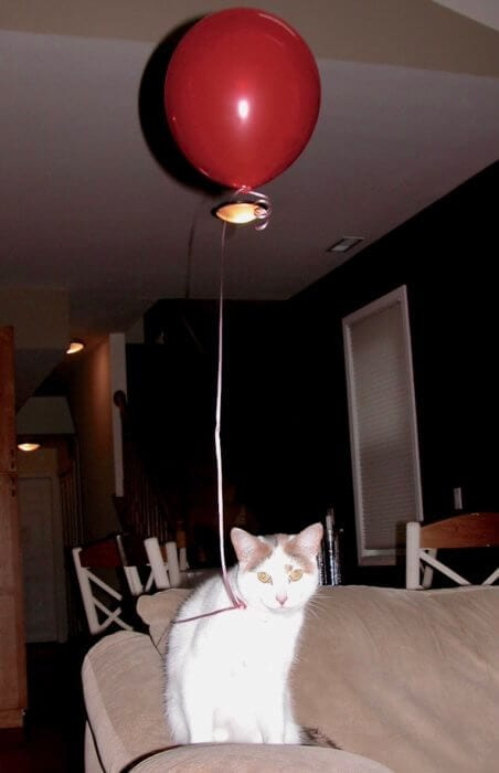 white cat with a balloon