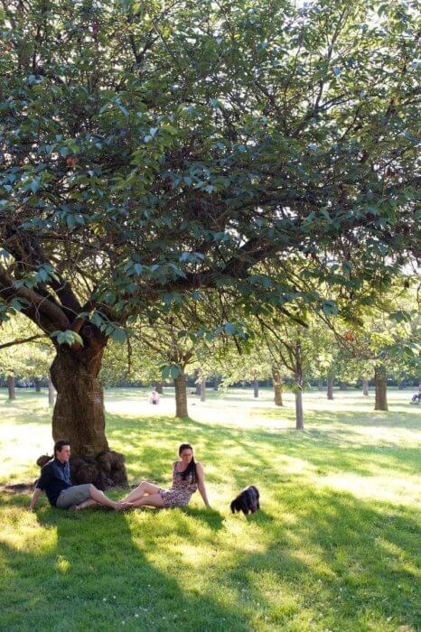 couple with dog under a tree: french lifestyle