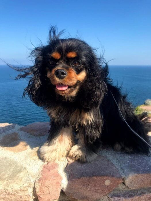 Cute black and brown dog with blue skies
